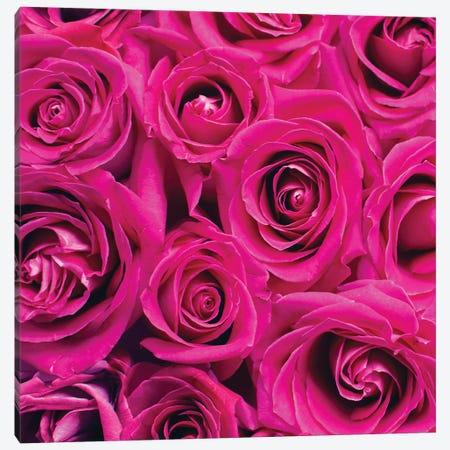 Paris Rose I Canvas Print #KAL893} by Kimberly Allen Art Print
