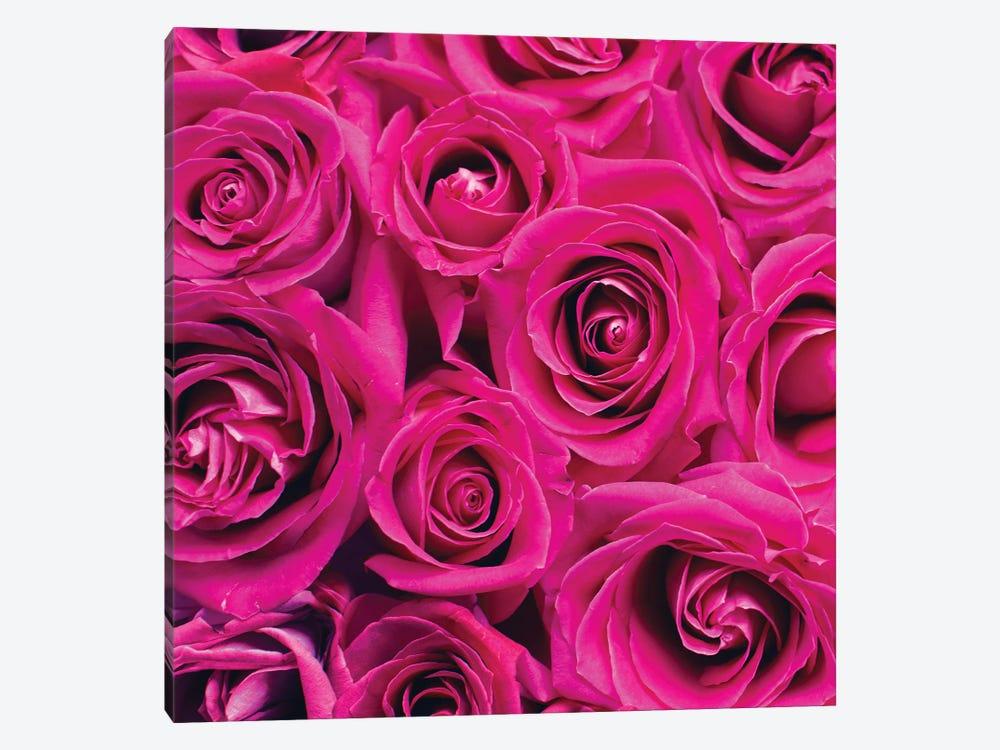 Paris Rose I by Kimberly Allen 1-piece Canvas Artwork
