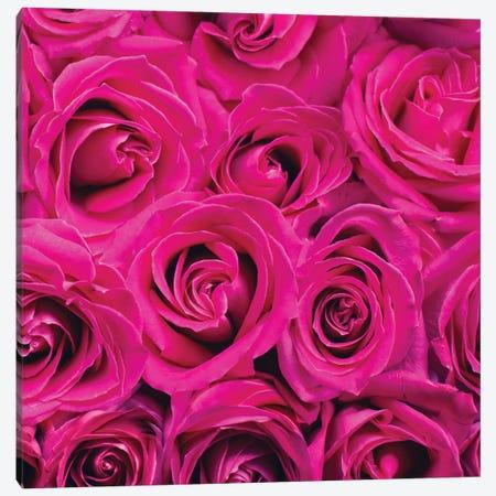 Paris Rose III Canvas Print #KAL895} by Kimberly Allen Canvas Art