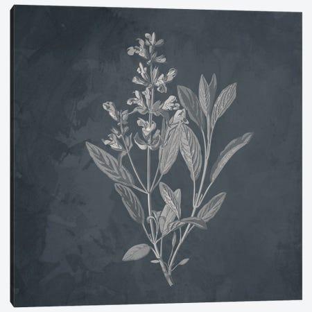 Plant I Canvas Print #KAL980} by Kimberly Allen Art Print