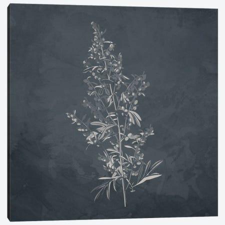 Plant II Canvas Print #KAL981} by Kimberly Allen Canvas Print