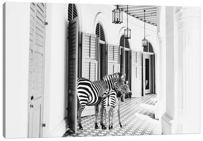 Zebra Hotel Canvas Art Print