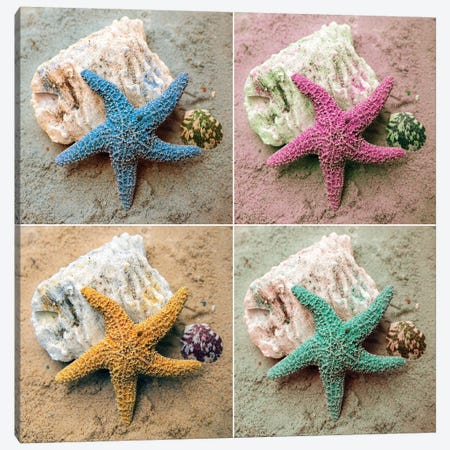 Colorful Starfish Canvas Print #KAM3} by Kathy Mansfield Canvas Wall Art