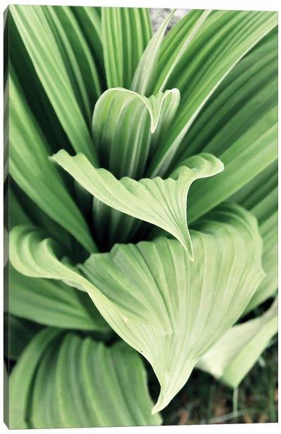 Green Leaf Blooms I Canvas Art Print