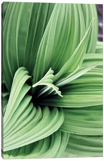 Green Leaf Blooms II Canvas Art Print