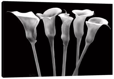 Lilies at Night Canvas Art Print