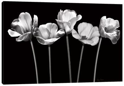 Tulips at Night Canvas Art Print