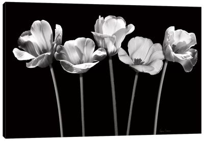 Tulips at Night Canvas Art Print