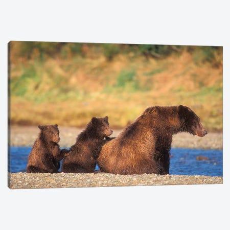 Brown Bear, Grizzly Bear, Sow With Cubs, Katmai National Park, Alaskan Peninsula Canvas Print #KAZ10} by Steve Kazlowski Canvas Wall Art