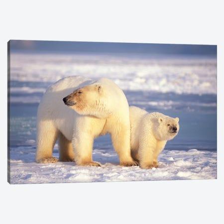 Polar Bear Sow With Cub On Pack Ice Of Coastal Plain, 1002 Area Of The Arctic National Wildlife Refuge, Alaska Canvas Print #KAZ15} by Steve Kazlowski Canvas Art Print