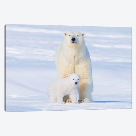 Polar Bear Sow With Spring Cub Newly Emerged From Their Den, Area 1002, Arctic National Wildlife Refuge, Alaska Canvas Print #KAZ31} by Steve Kazlowski Canvas Art