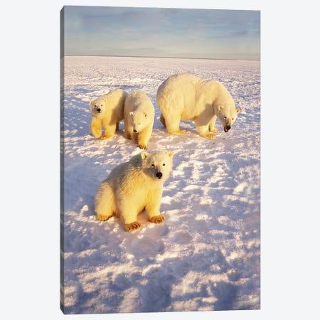 Polar Bear Sow With Spring Triplets On Frozen Arctic Ocean In 1002 Area Of The Arctic National Wildlife Refuge, Alaska Canvas Print #KAZ6} by Steve Kazlowski Art Print