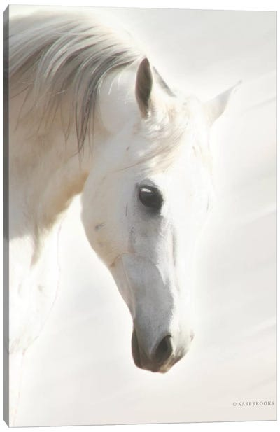 Pegasus I       Canvas Art Print