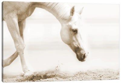 Trail Horse Sepia Canvas Art Print