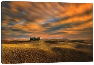 Cypresses... Canvas Art Print