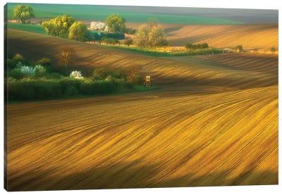 Fields... Canvas Art Print