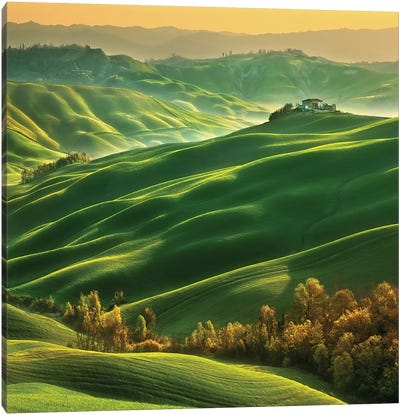 Mucigliani... Canvas Art Print