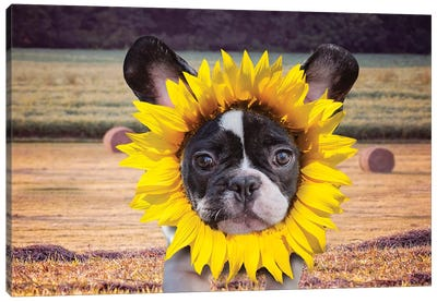 Sunflower Baby Frenchie Canvas Art Print