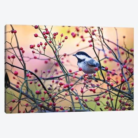 Chickadee Vivid Red Berries Canvas Print #KBU22} by Karen Burke Canvas Wall Art