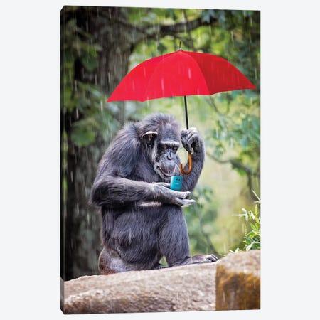 Chimp Staying Connected Canvas Print #KBU24} by Karen Burke Art Print