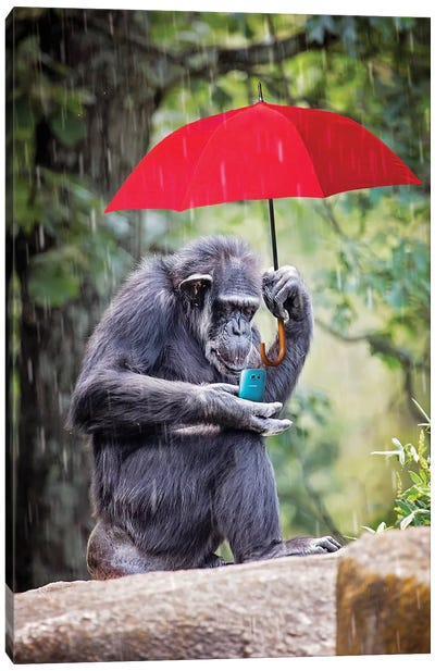 Chimp Staying Connected Canvas Art Print
