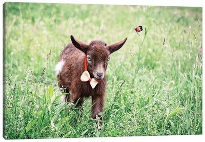 Dwarf Goat Bow Tie Canvas Art Print