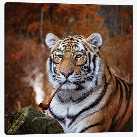 Gentleman Tiger Canvas Print #KBU34} by Karen Burke Canvas Art