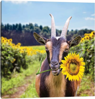 Goat In Sunflowers Canvas Art Print