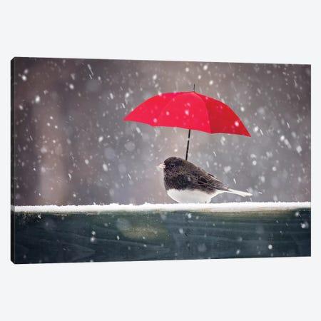 Junco And Red Umbrella Canvas Print #KBU38} by Karen Burke Art Print