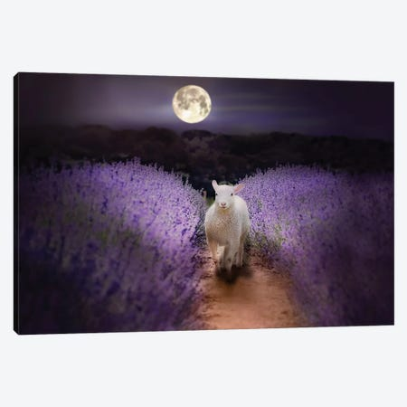 Little Lamb Moonlight Canvas Print #KBU40} by Karen Burke Canvas Artwork