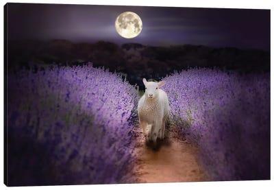 Little Lamb Moonlight Canvas Art Print
