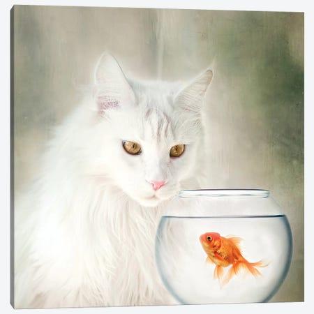 Lola Fish Bowl Canvas Print #KBU41} by Karen Burke Canvas Art