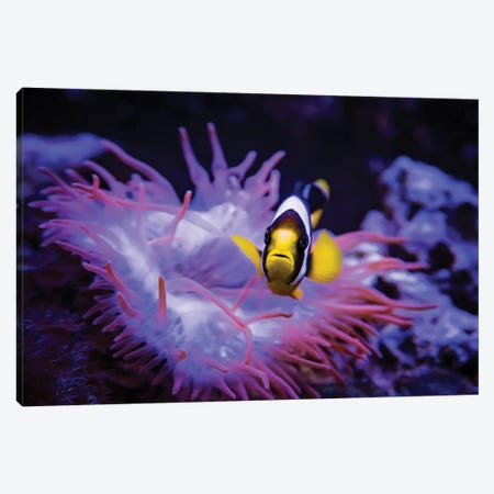 Madagascar Anemone Canvas Print #KBU42} by Karen Burke Canvas Wall Art