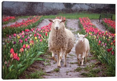 Mommy And Me Tulips Canvas Art Print