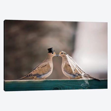 Mourning Dove Wedding Canvas Print #KBU51} by Karen Burke Art Print