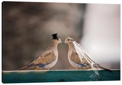 Mourning Dove Wedding Canvas Art Print