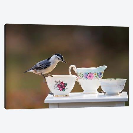Nuthatch And Tea Set Canvas Print #KBU54} by Karen Burke Canvas Artwork