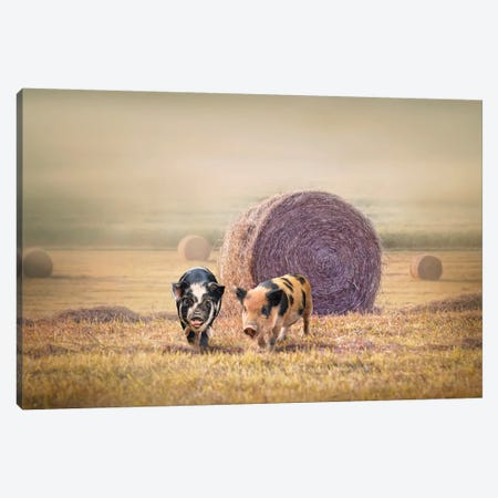 Piglets In Moring Fog Canvas Print #KBU58} by Karen Burke Art Print