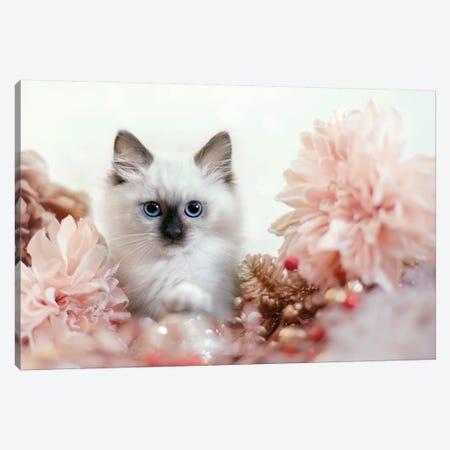 Pretty In Pink Kitten Canvas Print #KBU60} by Karen Burke Canvas Art