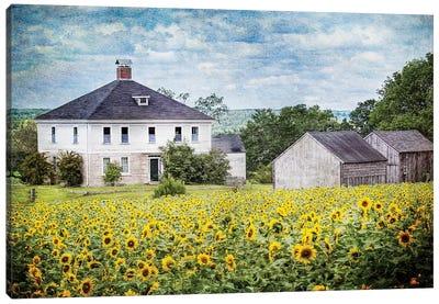 Sunflower Farm Canvas Art Print