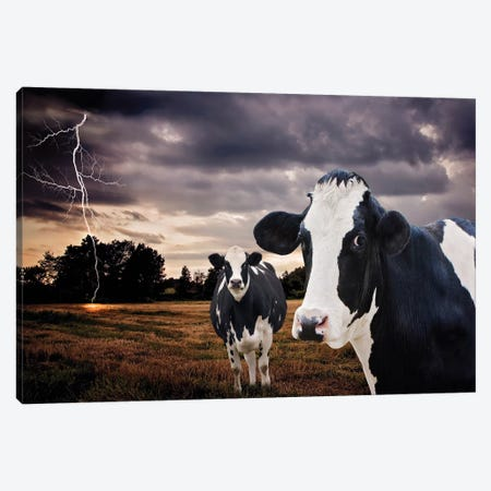 Till The Cows Come Home Canvas Print #KBU70} by Karen Burke Canvas Art Print