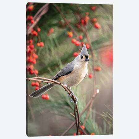 Tufted Titmouse Red Berries Canvas Print #KBU73} by Karen Burke Canvas Art Print