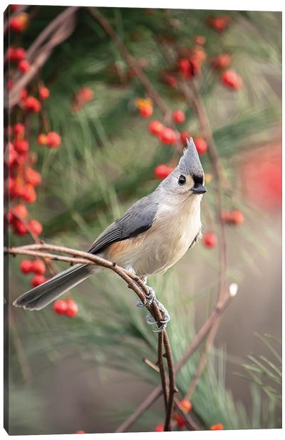 Tufted Titmouse Red Berries Canvas Art Print