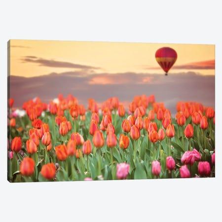 Tulip Field Hot Air Balloon Canvas Print #KBU74} by Karen Burke Canvas Artwork
