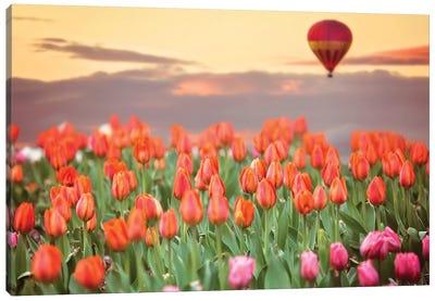 Tulip Field Hot Air Balloon Canvas Art Print