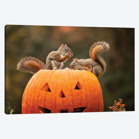 Red Squirrels And Pumpkin Canvas Print #KBU89} by Karen Burke Canvas Artwork