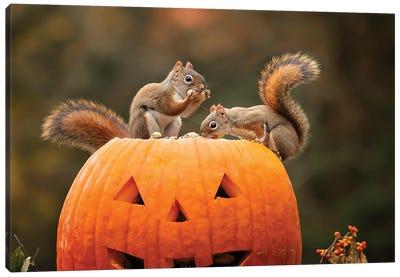 Red Squirrels And Pumpkin Canvas Art Print