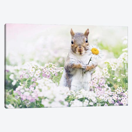 Squirrel Paradise Canvas Print #KBU93} by Karen Burke Canvas Print