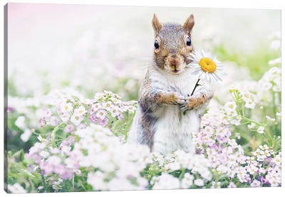 Squirrel Paradise Canvas Art Print