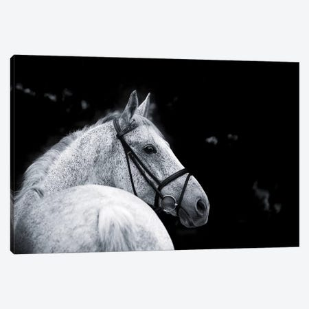 Bridled Beauty Canvas Print #KCE1} by KaCee Erle Canvas Artwork